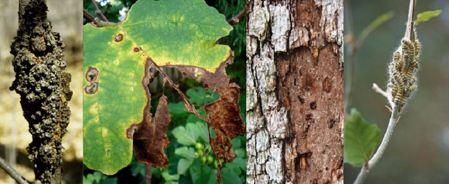 tree disease diagnosis and treatment